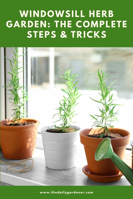 Windowsill Herb Garden The Complete Steps & Tricks 2