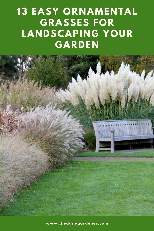 13 Easy Ornamental Grasses for Landscaping Your Garden 1