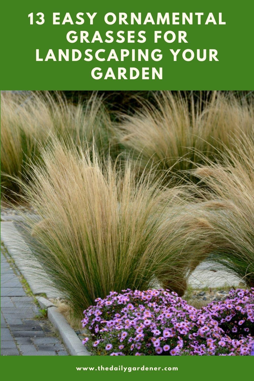 13 Easy Ornamental Grasses for Landscaping Your Garden 2