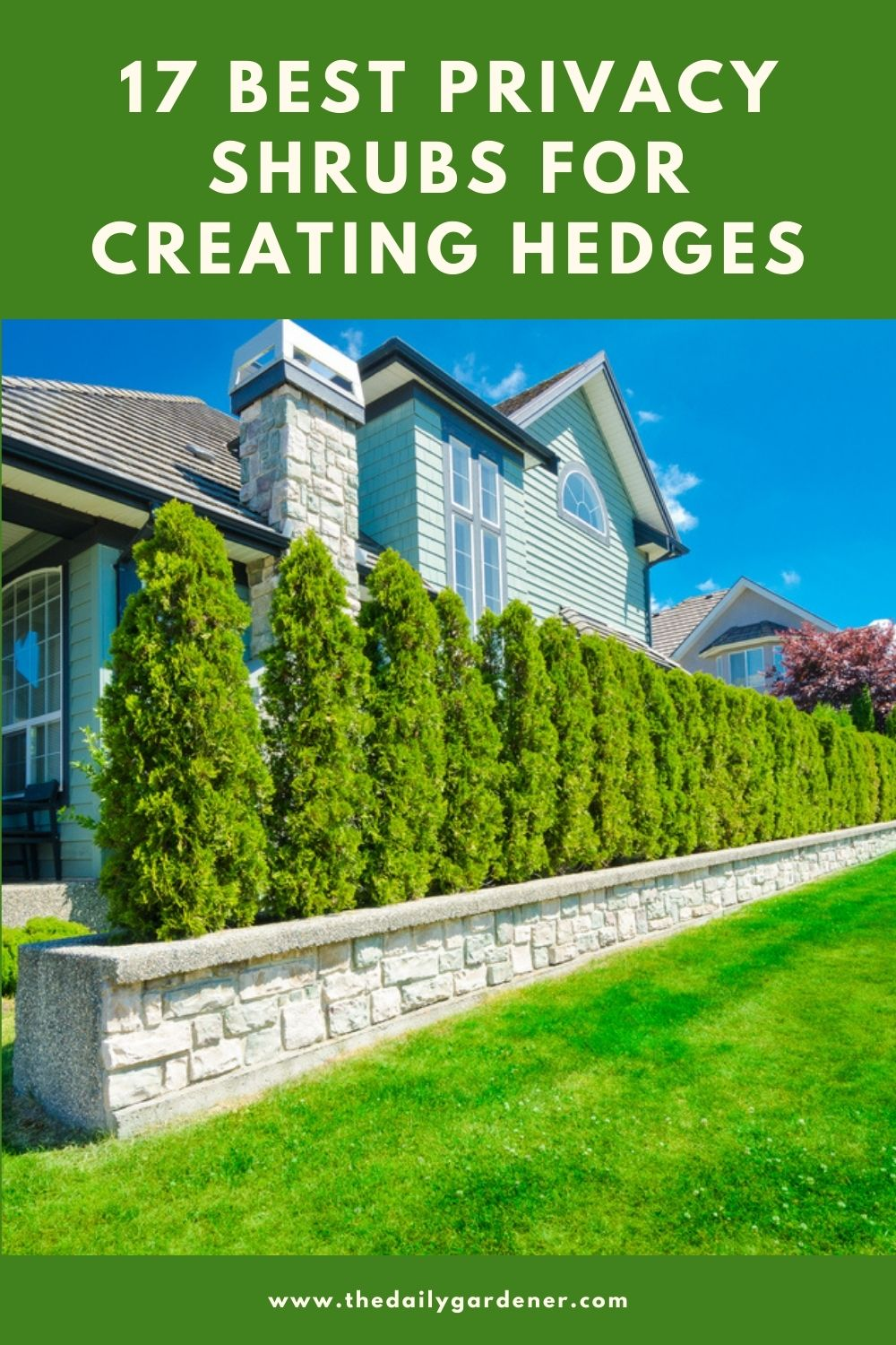 17 Best Privacy Shrubs for Creating Hedges 1