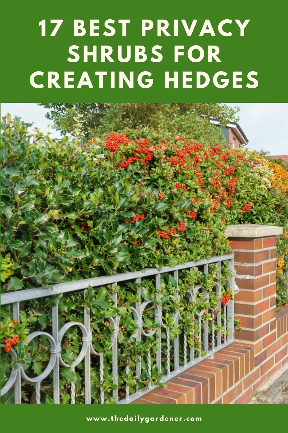 17 Best Privacy Shrubs for Creating Hedges 2
