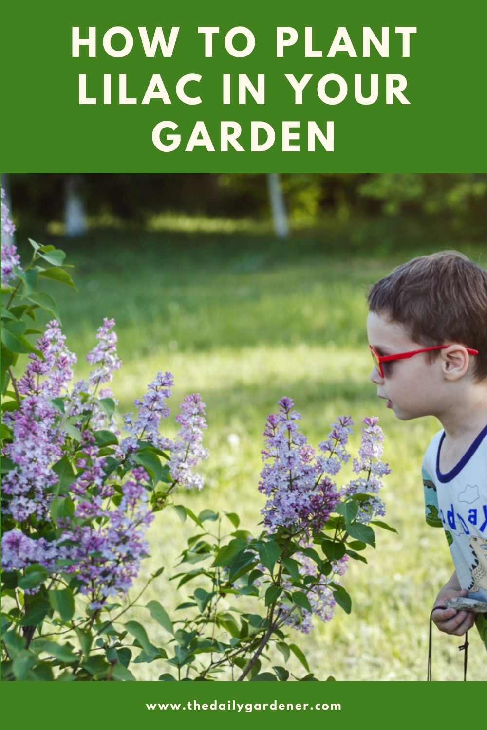 How to Plant Lilac in Your Garden (Tricks to Care!) 1