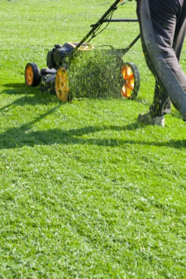 7 Lawn Mower Brands to Avoid (and Why)