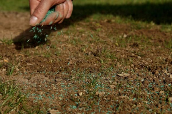 How to Overseed a Lawn? The Unlimited Guides