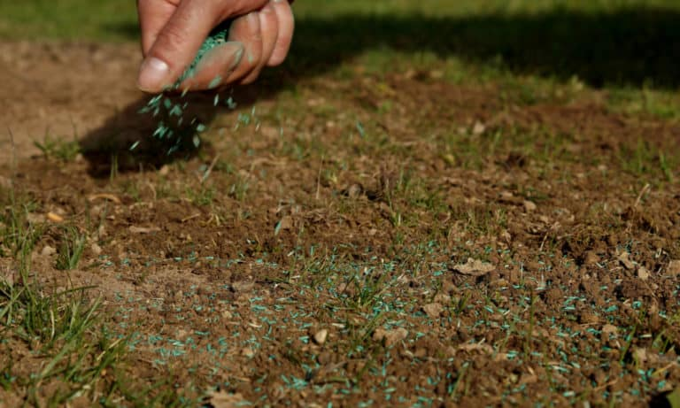 How to Overseed a Lawn The Unlimited Guides