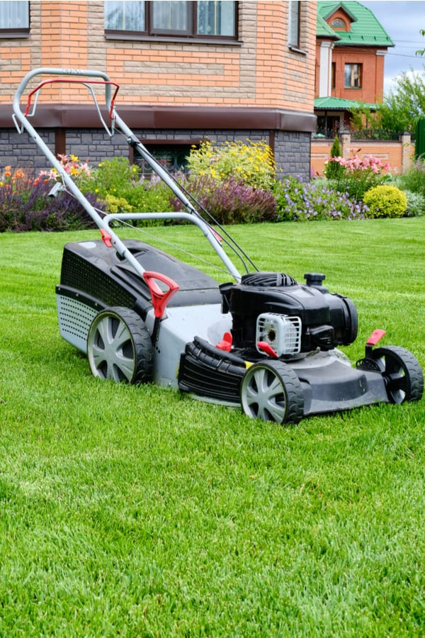 Mowing your lawn and regular lawn maintenance