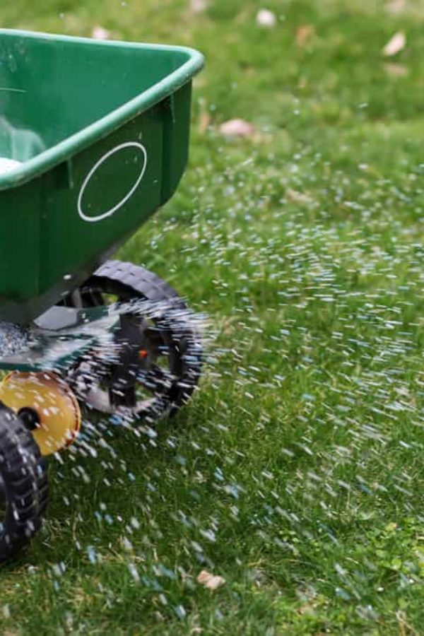 When to Fertilize New Grass? (3 Tips for Success)