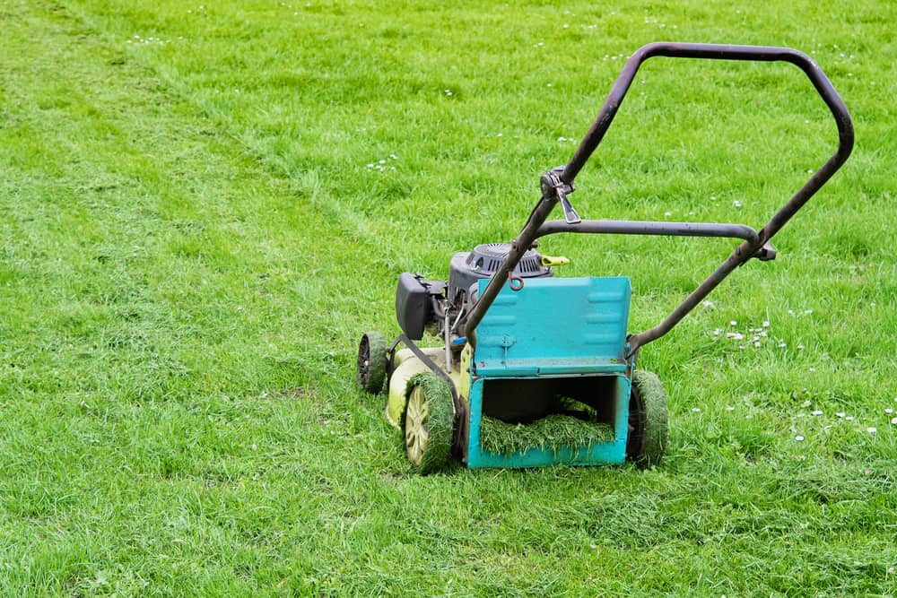 6 Tips for Mowing Wet Grass