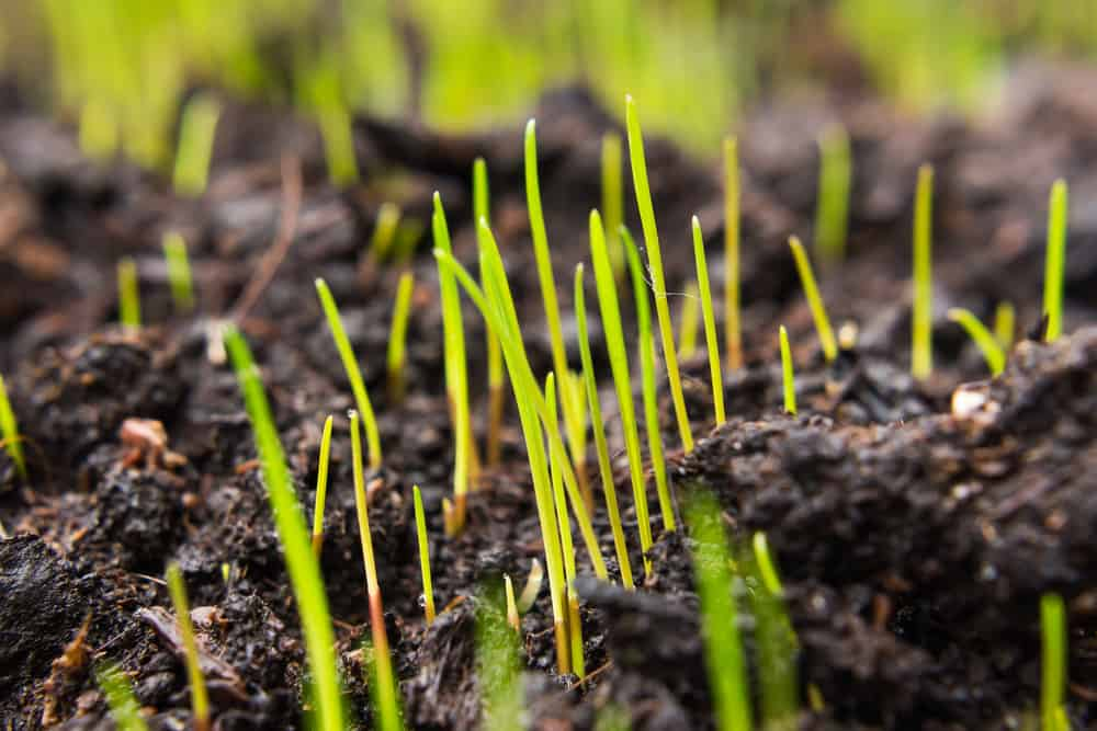 Factors that can slow down grass germination