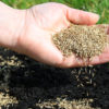 How Long Does it Take for Grass Seed to Grow? (7 Tips to Speed)