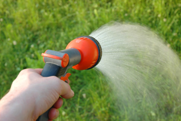 How Often Should I Water My Lawn? (What Happens If Too Often)