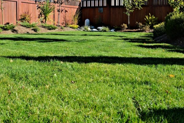 Ironite for Lawn: Is It Harmful? (7 Tips to Use)