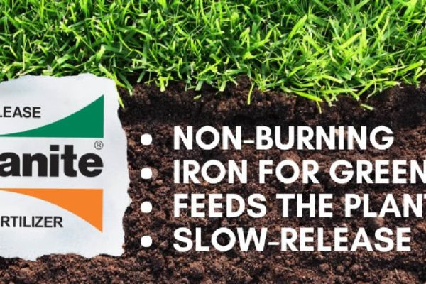 What is Milorganite? When to Apply It?
