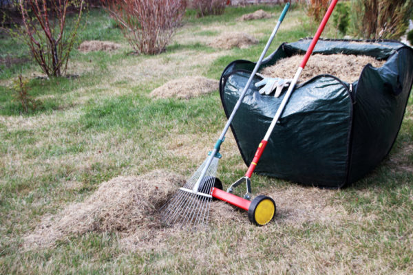 When & How to Dethatch a Lawn (After-Care Tips)