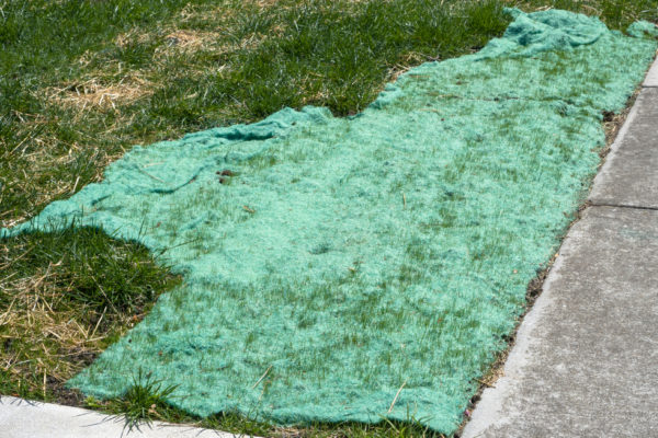 Will Grass Seed Grow If Not Covered? (Problems & Tips)