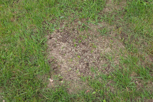 6 Best Grass Seed For Overseeding