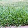 8 Tips To Kill Crabgrass