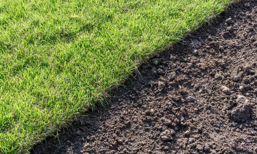 Sod Vs. Seeds. Which Is Better