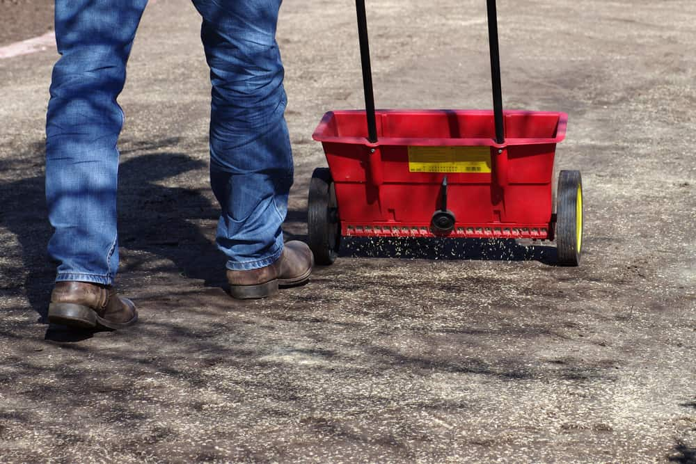 Lawn,New,Sowing,With,The,Help,Of,A,Spreader