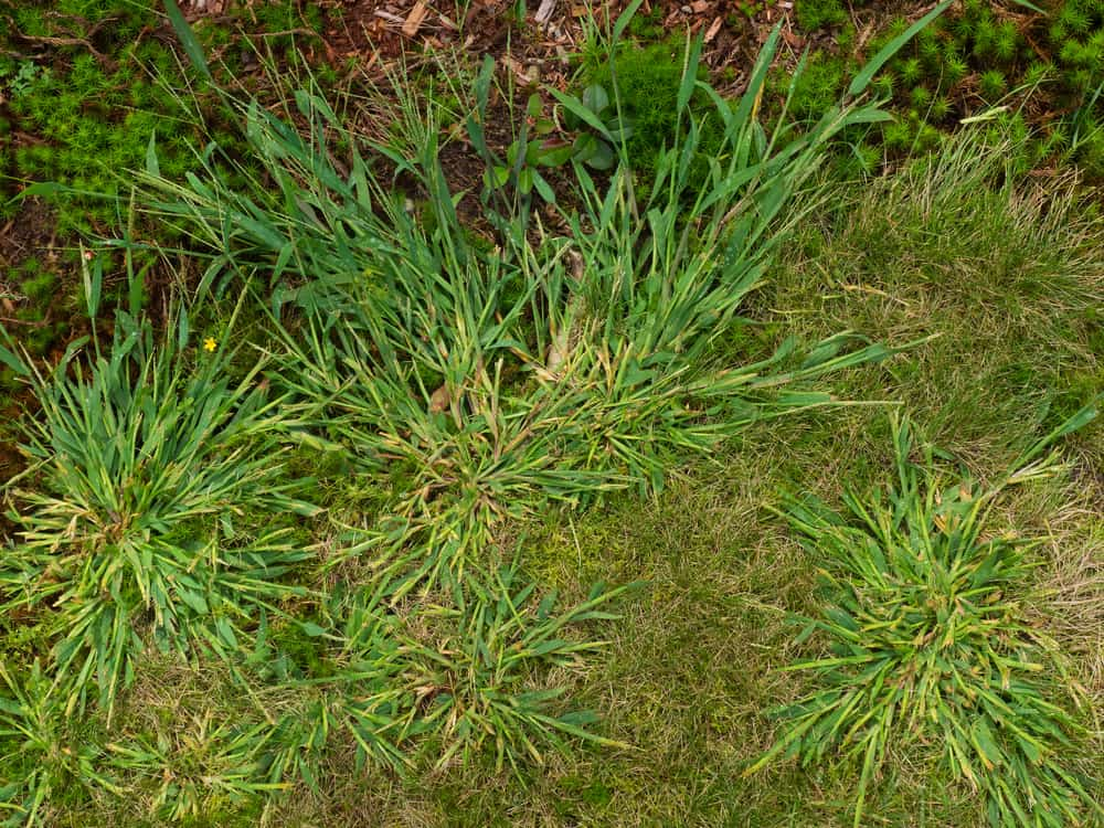 Address bare spots on your lawn