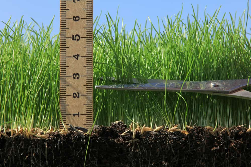 Ideal grass height by type