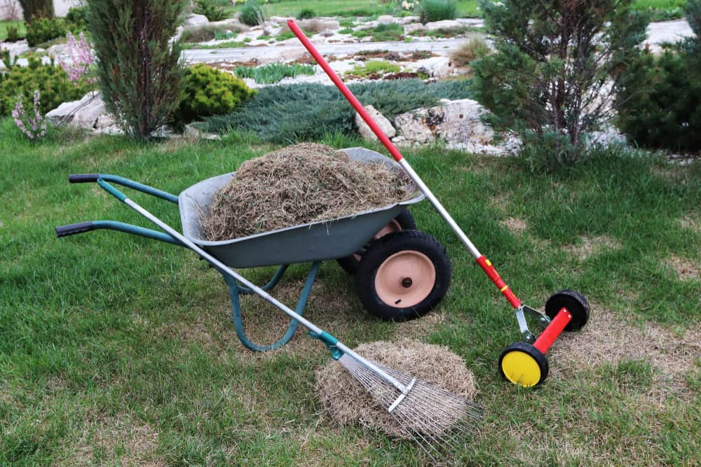 Lawn Dethatching After-care