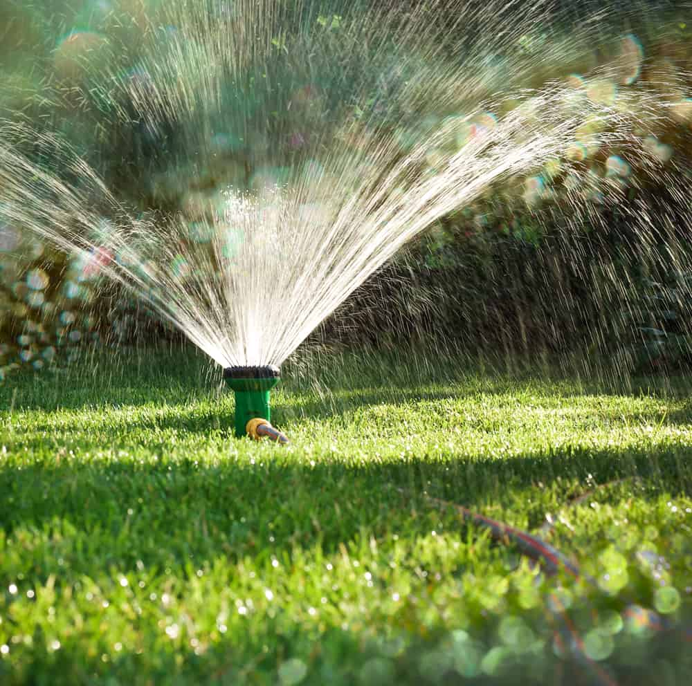When's the Best Time to Water Your Lawn