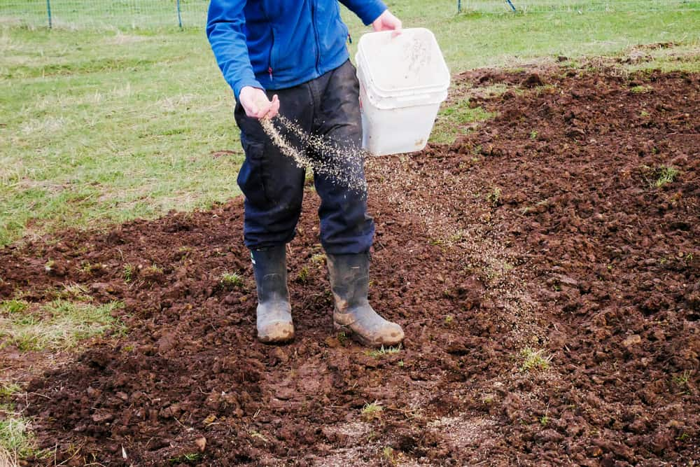 What to cover your grass seeds with