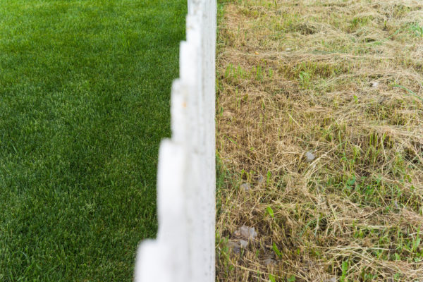 7 Ways to Make Grass Thicker and Fuller