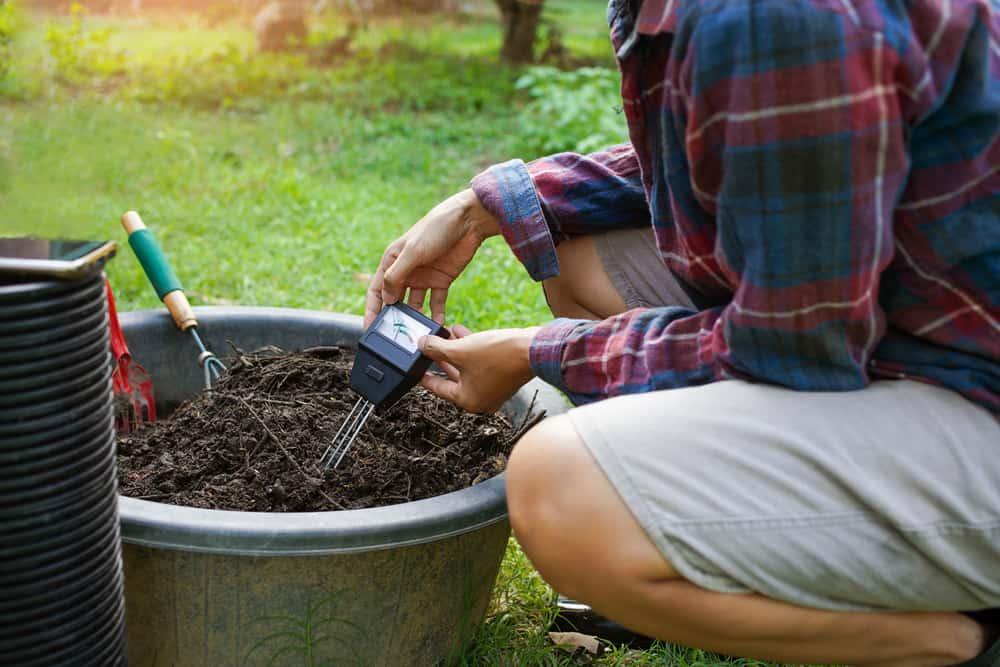 Test Your Lawn Soil