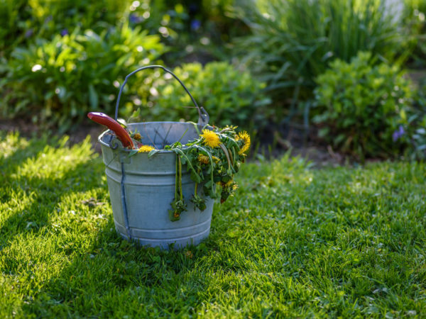 18 Tips to Get Rid of Weeds In the Lawn