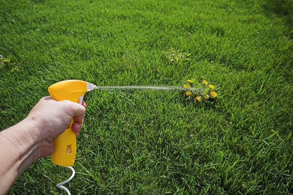 Spray weed with citrus liquid